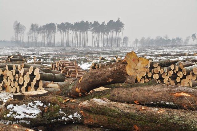 Corta de árboles en invierno