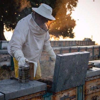 """Apicultores extremeños reclaman un """"etiquetado correcto"""" para evitar las mezclas con la miel"""
