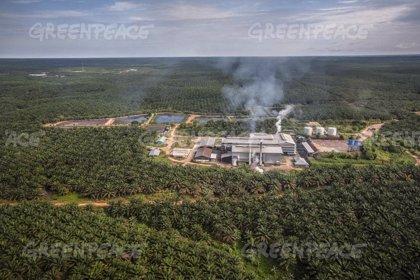 Patricia Conde denuncia con Greenpeace que cada día mueren 25 orangutanes en Indonesia por el aceite de palma