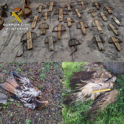 Detenida una persona e investigadas otras tres por usar venenos y trampas ilegales para cazar en fincas de Cáceres