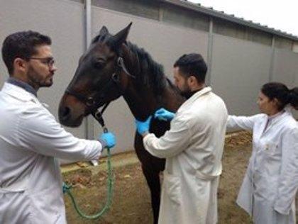 Detectados cinco focos del virus del Nilo occidental en Extremadura, dos en caballos y tres en aves silvestres