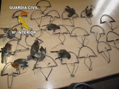 Investigado un vecino de Villanueva de la Reina (Jaén) de 82 años por usar artes prohibidas para cazar aves