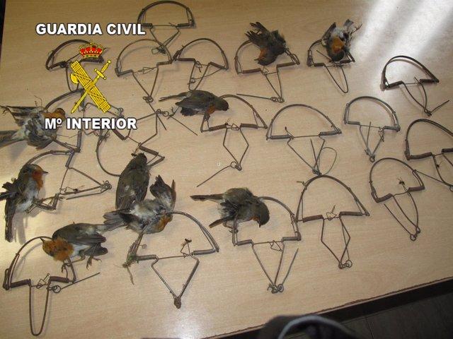 Trampas y aves intervenidas al hombre investigado en Villanueva de la Reina.