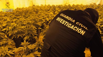 Intervenidas más de 8.000 plantas de marihuana con 29 investigados en octubre en Granada