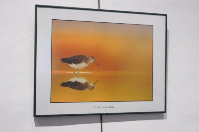 Una de las fotografías que componen la muestra