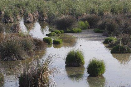 El humedal palaciego de El Pantano logra la declaración de Reserva Ecológica
