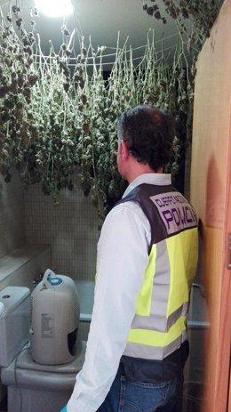 Plantas de marihuana en el baño del chalet