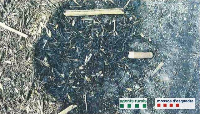 Denunciat per incendi forestal al Bages per l'ADN d'una burilla