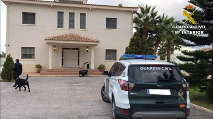 Desmantelada en Alicante una plantación de marihuana cuidada con música clásica las 24 horas para mejorar su calidad