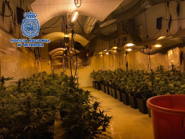 Laboratorio de marihuana cannabis sátiva
