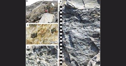 Muestras del suelo de la Tierra hace 3.700 millones de años
