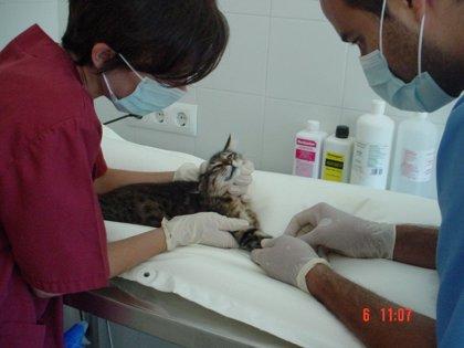 Las clínicas y hospitales veterinarios podrán contar con un depósito de fármacos estupefacientes