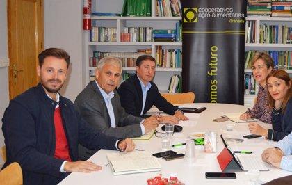 El PSOE valora el empuje de las cooperativas agroalimentarias en la economía de Granada