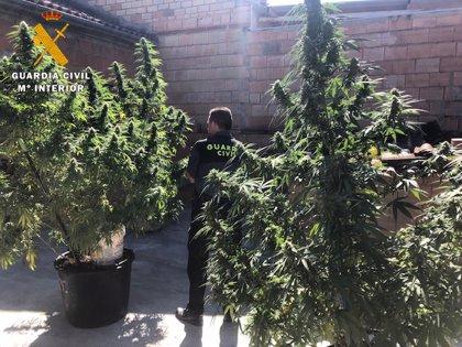 Detenidos tres varones tras intervenirles más de 12 kilos de marihuana en Benamejí (Córdoba)