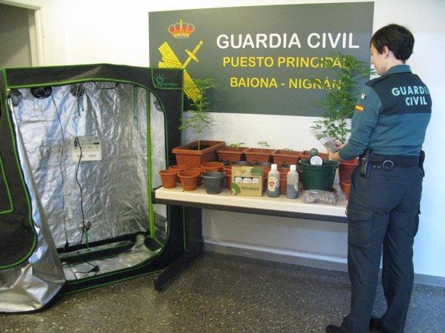Plantación de marihuana incautada en Baiona (Pontevedra)