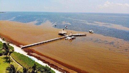 Cancún demostrará al mundo que se ha librado del sargazo
