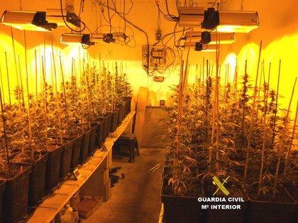 Detenidas dos personas por cultivo y elaboración de marihuana en una vivienda de Porreres