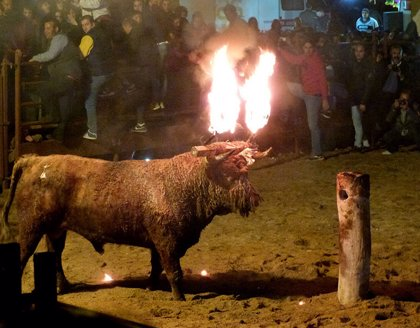 Conoce la historia del último toro de fuego de Castilla y León