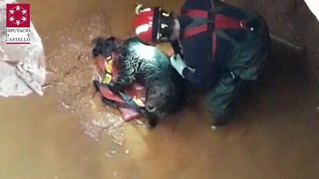 Perro rescatado en Benlloc