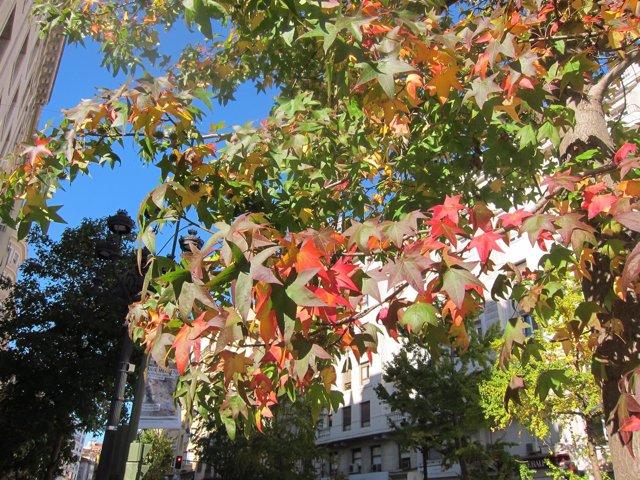Arboles y hojas en otoño en Santander