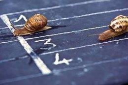 Imagen de carrera de caracoles