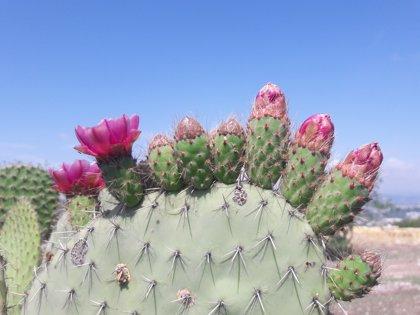 La Biosfera de Tehuacán-Cuicatlán, declarada Patrimonio de la Humanidad por la UNESCO