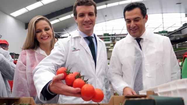Maribel Sánchez, Pablo Casado y Juanma Moreno (PP)