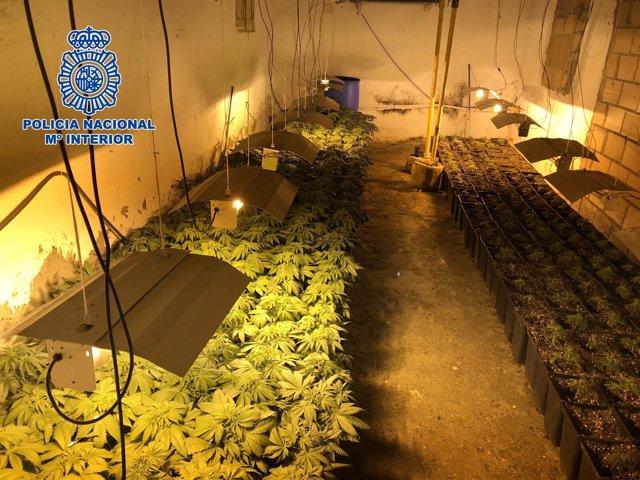 Marihuana intervenida en una casa okupa de Los Molinos