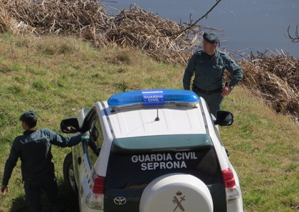 Detenido por secar parte del cauce del Órbigo en Benavente (Zamora) para plantar chopo canadiense