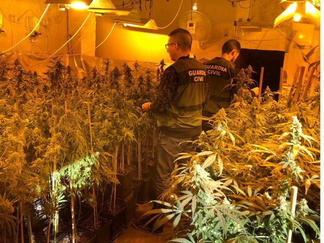 Una de las plantaciones de marihuana desarticuladas en Arjona.