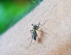 Detecten el primer cas de dengue autòcton a Catalunya (PIXABAY - Archivo)