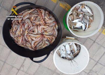 Incautados 30 kilos de langostino, sepia y morralla en el puerto de Peñíscola sin documentos de trazabilidad