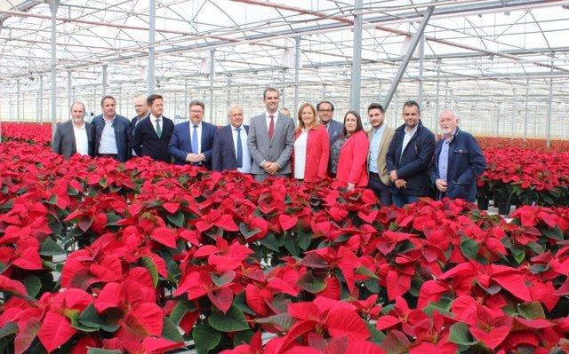 Las exportaciones de plantas ornamentales de Almería aumentan un 36% en los primeros ocho meses del año
