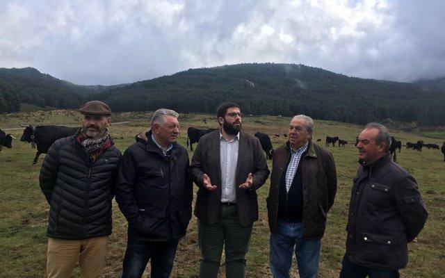 La Diputación de Ávila destaca el 'excelente estado' de la ganadería de El Colmenar