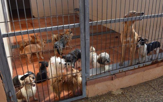 Colectivos propondrán en el Parlamento gallego crear un registro autonómico de maltratadores de animales