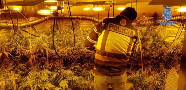 Laboratorio clandestino de marihuana desarticulado en Pepino