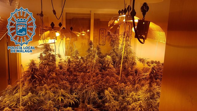 Marihuana vivienda interior málaga policía local