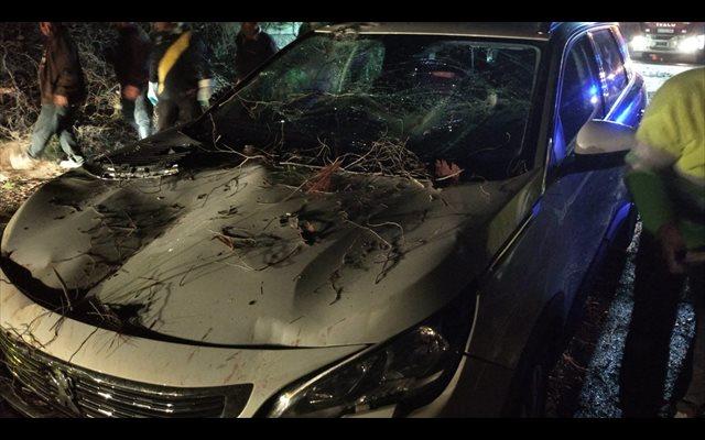 Ilesos una mujer y tres niños tras caer un árbol sobre su coche cuando circulaba por una carretera de Jete (Granada)