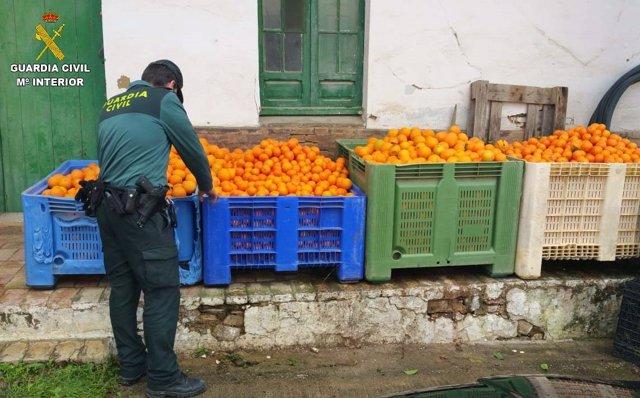 Unos 2.700 kilos de naranjas recuperadas tras ser robadas.