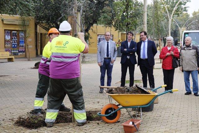 Ayuntamiento de sevilla planta 24 rboles en la alameda de h rcules - Jardines de hercules sevilla ...