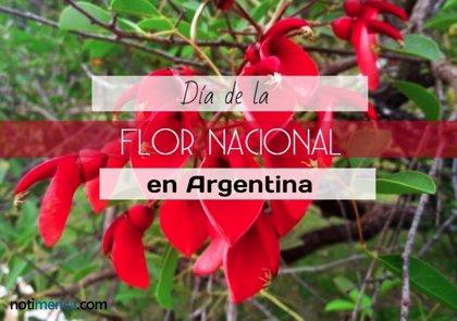 22 de noviembre: Día de la Flor Nacional en Argentina, 'Ceibo', ¿por qué se celebra hoy?