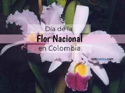 22 de noviembre: Día de la Flor Nacional en Colombia, ¿por qué se escogió esta fecha para su celebración?