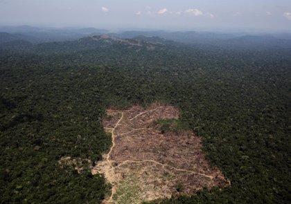 La deforestación en la Amazonia brasileña alcanza su nivel más alto en una década