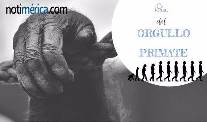 24 de noviembre: Día del Orgullo Primate, ¿cuál es el motivo de esta celebración?