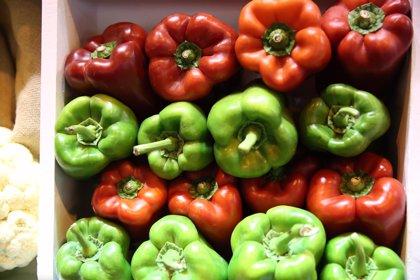 El pimiento, el pepino y el calabacín superan los resultados de la pasada campaña al activarse las exportaciones
