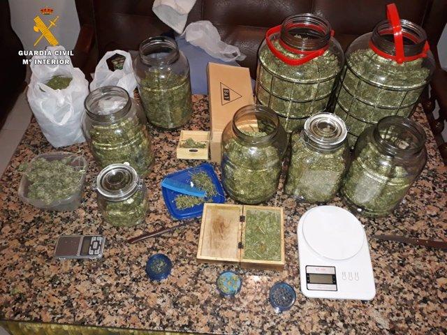 Cogollos de marihuana intervenidos por la Guardia Civil