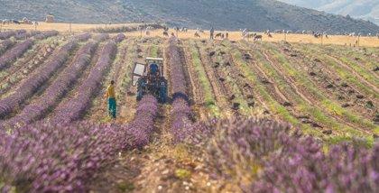 Los cereales alternativos y plantas aromáticas, protagonistas de la presentación de proyectos FITE del CITA