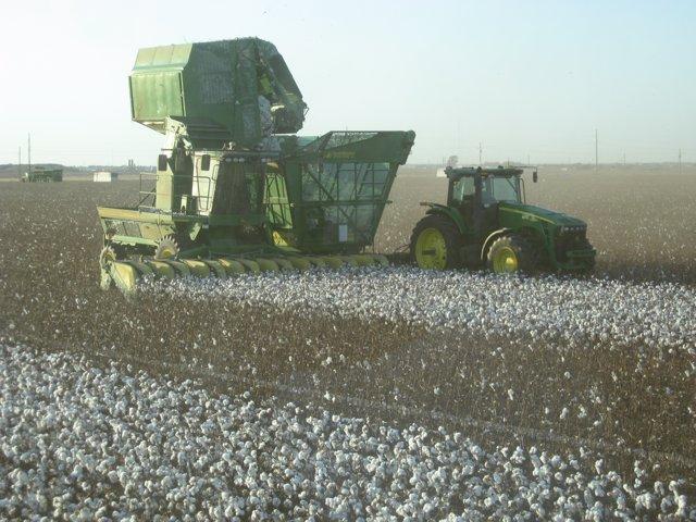 Cosechadora de algodón