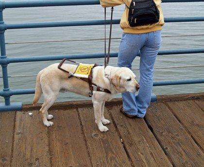 El Principado trabaja en una ley para regular el apoyo de los perros de asistencia