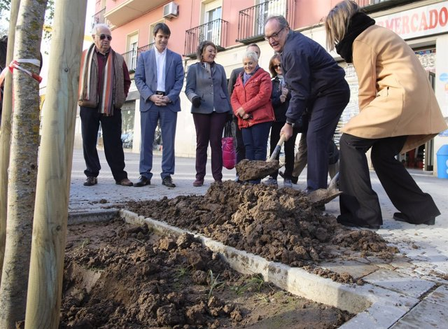 Plantación en la Avenida de Cádiz, en Sevilla